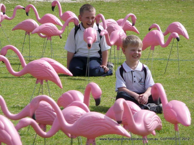 Flamingos-for-Celebrations-at-Currambine-Primary-School 7